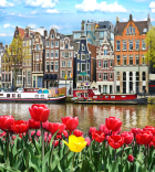 image of tulips in full bloom next to river in the netherlands with cruise boats on the water
