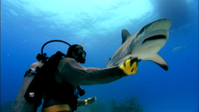 still from sharkwater